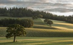 Stoller Family Estate Vineyard view from tasting room Winery Image