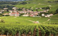 Domaine Ferret Fuisse Perrieres Town Vineyard Winery Image