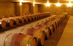 Falernia  Winery Image