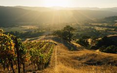 Kosta Browne Cerise Vineyard Winery Image
