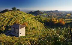 Adami Bosco di Gica vineyards in Colbertaldo Winery Image