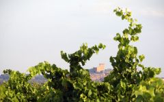 Domaine de Marcoux View from Gallimardes Winery Image
