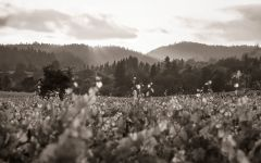Aubert Vineyard Appellations Winery Image