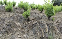 Vall Llach Vall Lach Vines and Rocky Soil Winery Image