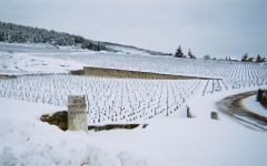 Domaine Pierre Gelin  Winery Image