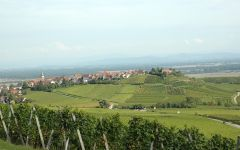 Pierre Sparr Vineyards; Alsace in the distance Winery Image