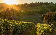 Colene Clemens Barn and Vineyards at Sunset Winery Image