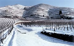Delas Freres Delas' Hermitage vineyards in the winter Winery Image