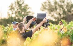 Cellier des Dauphins Harvesting Cotes du Rhone Grapes Winery Image