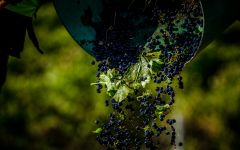 Mollydooker Winery Image