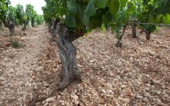 Billaud-Simon The soil of Chablis Winery Image