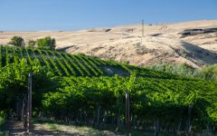 Eroica Viewcrest Vineyard Winery Image