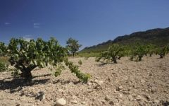 Bodegas Hijos de Juan Gil Jumilla's Sandy and Pebbled Soils Winery Image