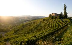 Vietti Lazzarito Vineyard Winery Image