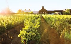 Turnbull Turnbull Home Vineyard Winery Image