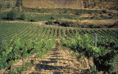 Argiolas Argiolas Vineyard Winery Image