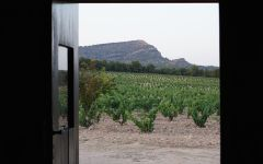 Bodegas Castano Arabi Vineyard Winery Image