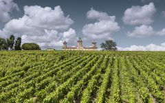 Chateau Cos d'Estournel The Vineyard Winery Image