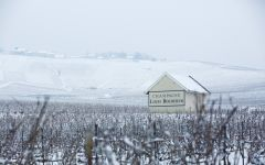 Louis Roederer Winter at Champagne Louis Roederer Winery Image