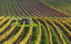 Domaine Faiveley Winery Image