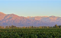 Bodegas Caro Winery Vineyard View of the Mountains Winery Image