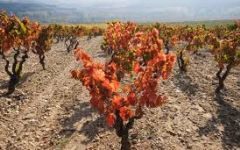 R. Lopez de Heredia R. Lopez de Heredia Vines Winery Image