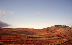 Marques de Caceres Marques de Caceres Vineyard Winery Image