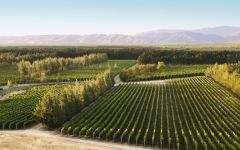 Estancia Pinnacles Vineyard Winery Image