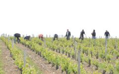 Domaine Pichot Tending to the Vineyard Winery Image