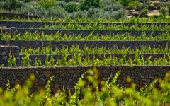 Pietradolce Stone Terraces made of Volcanic Rock Winery Image