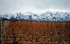 Finca El Origen The Andes Mountains Winery Image