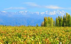 Luca Luca Vineyard in Mendoza Winery Image