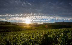 Faust Coombsville Sunrise Winery Image