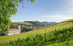 Alsace Willm Winery Image