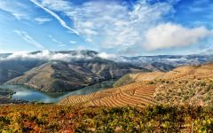 Broadbent The Douro River in the Douro Valley Winery Image