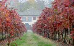 Cleto Chiarli Vines in Fall Winery Image