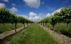 Mohua Vineyards in Marlborough Winery Image