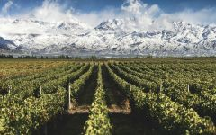 Piattelli Bodega Piattelli Vineyard in Mendoza Winery Image