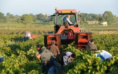 Domaine de la Janasse Taking care of the land Winery Image