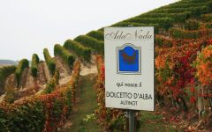 Ada Nada Ada Nada's Dolcetto plot Winery Image