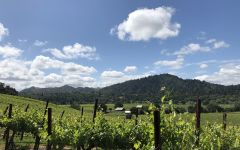The Counselor River Pass Vineyard Winery Image