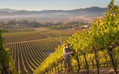 Abacela Earl Picking Harvest Winery Image