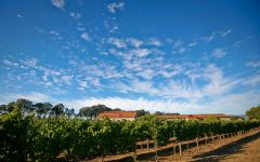 Etude Winery Image