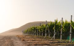 Nielson Nielson Vineyard in Santa Barbara County Winery Image