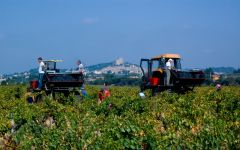 Domaine Giraud Harvest in Gallimardes Winery Image