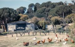 VieVite Chickens in the Vineyard Winery Image