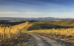 Castiglion del Bosco Capanna Vineyard  Winery Image