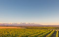 Vina Cobos Vineyards Against the Andes Mountains Winery Image