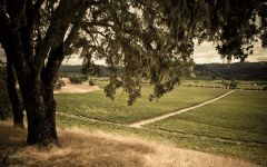 Beringer Vineyards Knights Valley Vineyard Winery Image