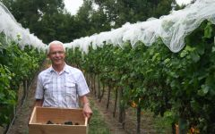 Villa Maria Founder Sir George Fistonich in the vineyard Winery Image